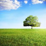 ◆シンボルツリー◆